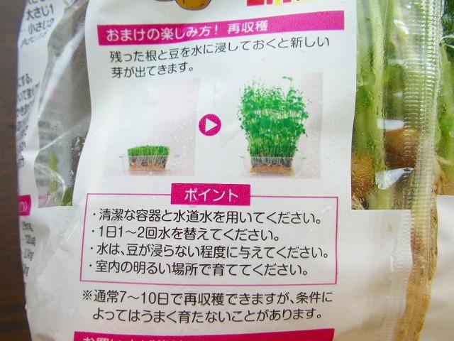 豆苗(とうみょう)の再収穫にチャレンジ!