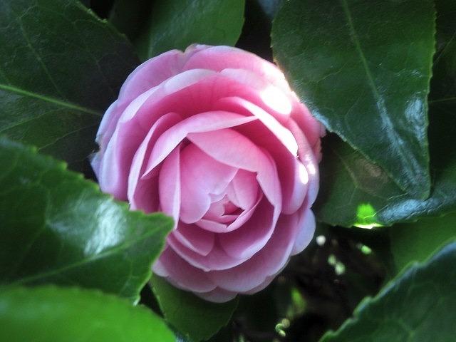 flower-100.jpg